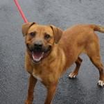 Adoptable Georgia Dogs for April 24, 2014