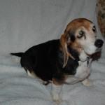 Adoptable Georgia Dogs for April 10, 2014