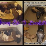 Adoptable Georgia Dogs for July 15, 2014