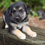 Adoptable Georgia Dogs for September 11, 2014