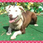Adoptable Georgia Dogs for September 3, 2014