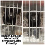 Adoptable Georgia Dogs for October 6, 2014