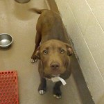 Adoptable Georgia Dogs for December 24, 2014