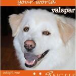 Adoptable Georgia Dogs for December 12, 2014
