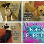 Adoptable Georgia Dogs for January 19, 2015