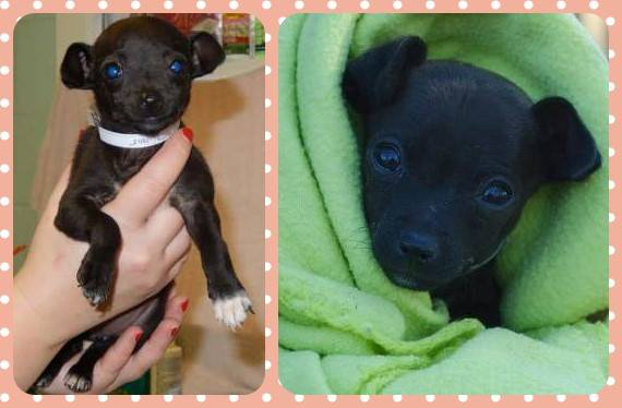 Adoptable Georgia Dogs for January 9, 2015 - Georgia