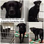 Adoptable Georgia Dogs for February 16, 2015
