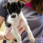 Adoptable Georgia Dogs for February 13, 2015