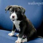 Adoptable Georgia Dogs for February 24, 2015