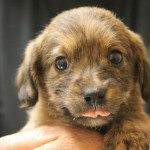 Adoptable Georgia Dogs for May 13, 2015