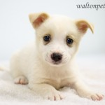 Adoptable Georgia Dogs for May 29, 2015