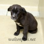 Adoptable Georgia Dogs for June 12, 2015