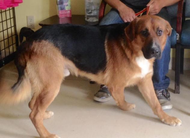 Adoptable Georgia Dogs For August 11 2015 Georgia