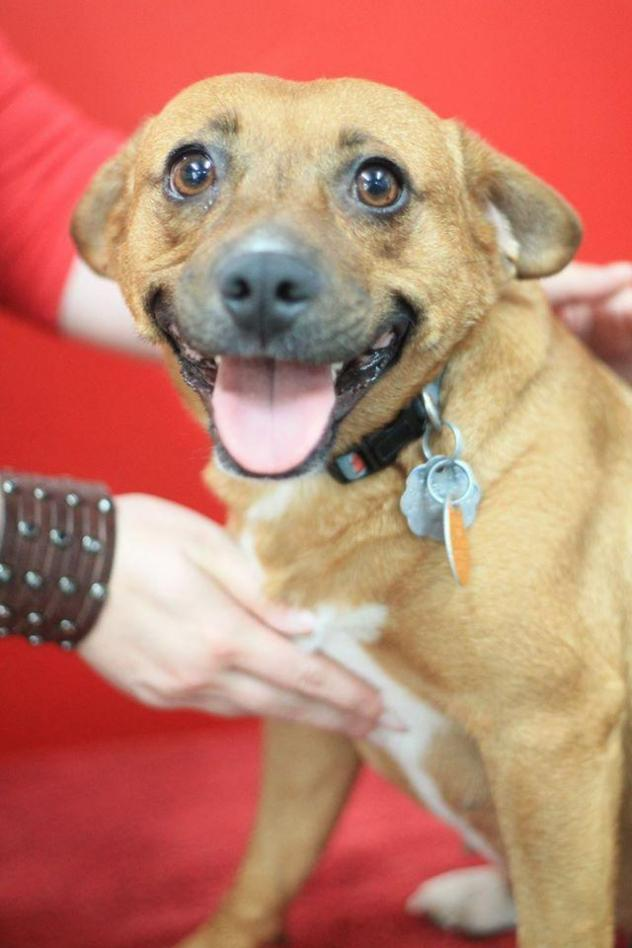 adoptable georgia dogs for september georgia