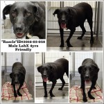 Adoptable Georgia Dogs for March 30, 2016