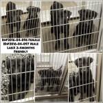 Adoptable Georgia Dogs for April 27, 2016