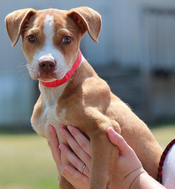 Adoptable Georgia Dogs for June 28, 2016 - Georgia Politics