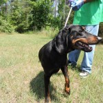 Adoptable (Official) Georgia Dogs for August 1, 2016