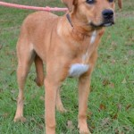 Adoptable (Official) Georgia Dogs for August 2, 2016