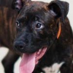 Adoptable (Official) Georgia Dogs for October 17, 2016