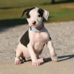 Adoptable (Official) Georgia Dogs for October 14, 2016