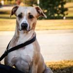 Adoptable (Official) Georgia Dogs for December 1, 2016