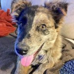 Adoptable (Official) Georgia Dogs for January 24, 2017
