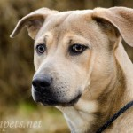 Adoptable (Official) Georgia Dogs for January 4, 2017