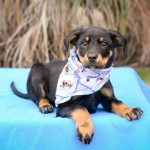 Adoptable (Official) Georgia Dogs for January 18, 2017