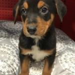 """Adoptable """"Official"""" Georgia Dogs for February 7, 2017"""
