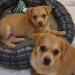 Adoptable (Official) Georgia Dogs for March 23, 2017