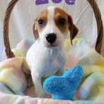 Adoptable (Official) Georgia Dogs for May 27, 2016