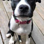 Adoptable (Official) Georgia Dogs for June 6, 2017