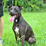 Adoptable (Official) Georgia Dogs for June 14, 2017