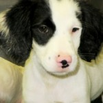 Adoptable (Official) Georgia Dogs for August 28, 2017