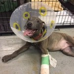 Adoptable (Official) Georgia Dogs for October 24, 2017