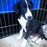Official (Adoptable) Georgia Dogs for October 13, 2017