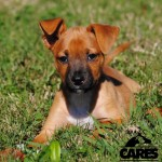 Adoptable (Official) Georgia Dogs for October 31, 2017
