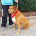 Adoptable (Official) Georgia Dogs for November 28, 2017