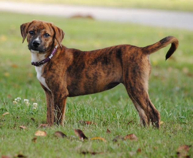 Dog adoption Archives | Page 37 of 140 | GaPundit