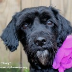 Adoptable (Official) Georgia Dogs for January 23, 2018