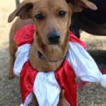 Adoptable (Official) Georgia Dogs for January 4, 2018