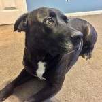 Adoptable (Official) Georgia Dogs for February 6, 2018