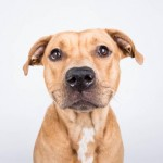 Adoptable (Official) Georgia Dogs for June 20, 2018
