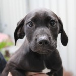 Adoptable (Official) Georgia Dogs for June 4, 2018
