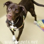 Adoptable (Official) Georgia Dogs for June 19, 2018