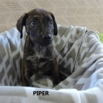 Adoptable (Official) Georgia Dogs for August 22, 2018