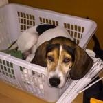 Adoptable (Official) Georgia Dogs for September 7, 2018