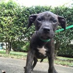 Adoptable (Official) Georgia Dogs for October 8, 2018