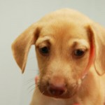 Adoptable (Official) Dogs for October 17, 2018